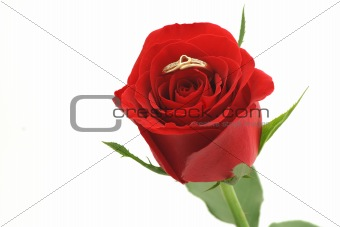 Red rose with heart shaped ring