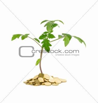 Plant growth - business concept