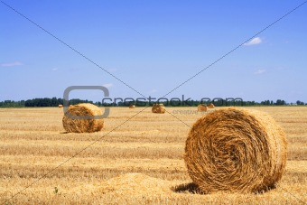 Straw or hay bales on a stubble field