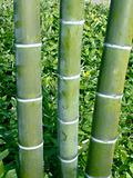 three bamboo poles