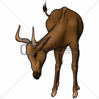Grazing antelope