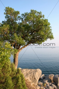 A single tree on the sea shore