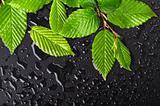 leaf and black background