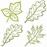 Leaves of plants, pictogram, set