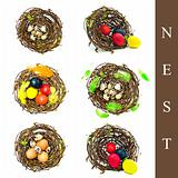 nest with different eggs