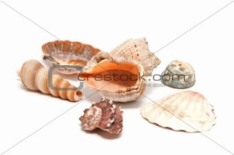 A lot of seashells