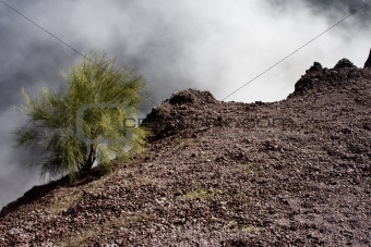 A shrub on the crater of the Mount Vesuvius.