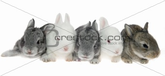 Five little rabbits in a row