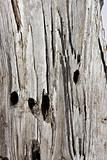 texture of umber grey wood tree