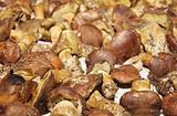Texture of Polish mushroom (Xerocomus badius)