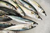 Fresh mackeler fish, market of Madeira, Portugal
