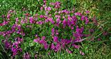 Purlple wildflowers