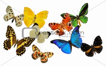 group of butterfly