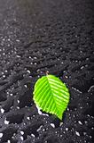 leaf and black background