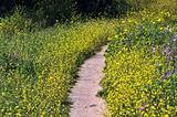 flower path