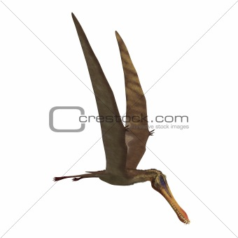 Dinosaur Anhanguera Pterosaur
