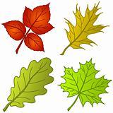 Leaves of plants, set