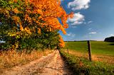 country road and autumn trees