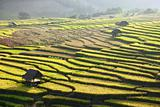 Terraced rice field and hut on Mountain