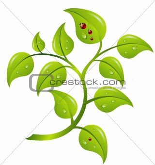 Green branch tree, vector
