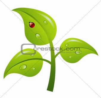 Green branch tree, vector