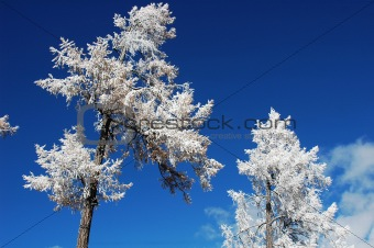 Rime in winter