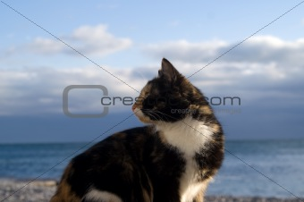 Cat against blue sky and sea