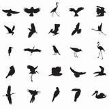 different kind of Bird