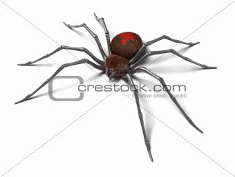 Spider : Black Widow. Isolated on white. 3D render
