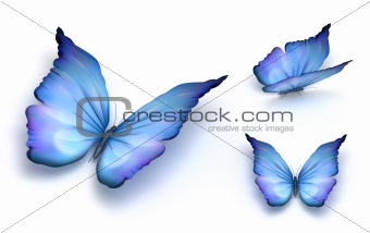 Blue butterfly isolated on white. 3d render. Isolated on white