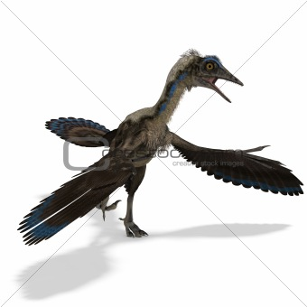 Dinosaur Archaeopteryx