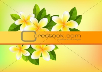 Frangipani background