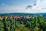 Vineyard and residential district in Stuttgart city center.