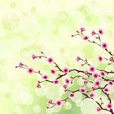 Flowering tree background