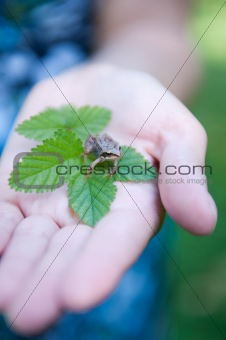 little frog on womans hand