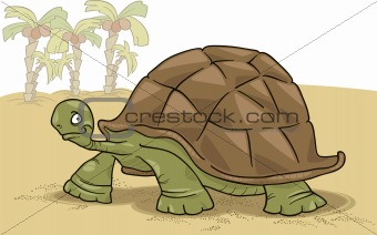 big turtle