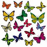 A collection of butterflies