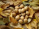 leaves and nuts