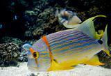Tropica fish