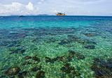 Clear water sea - beautiful coral