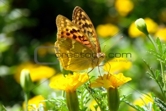 Brightly butterfly