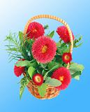 Red aster flower bouquet isolated on blue background