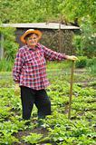 Senior woman gardening - hoeing potatoes