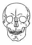 vector skull - warning sign
