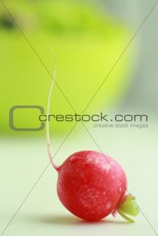 One red radish