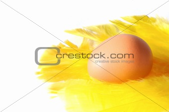 An egg lying on yellow feathers