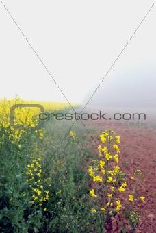 Lithuanian landscape 1