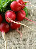 bunch of red ripe radish