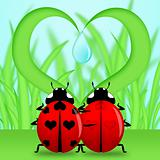 Ladybug Couple Under Heart Shape Grass