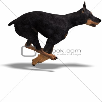 Black Doberman Dog